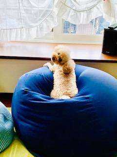 ドジで可愛い愛犬のお散歩とIHプライパンでふんわりオムライス
